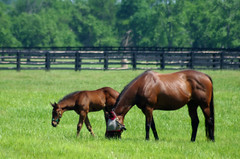 """Bay Mare and Foal (Jenny Gandert Photography - aka """"Rays From Heaven"""") Tags: horse drive mare lexington pasture colt thoroughbred filly foal rexington jennygandert gandert"""