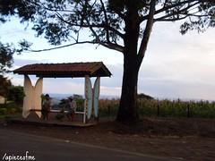 Ponto (Mááh :)) Tags: brasil pessoas céu borboleta santacatarina terra asfalto árvore entardecer paradadeonibus seara fritzplaumann