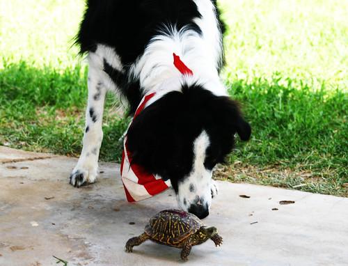 jake&turtle