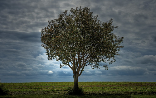 フリー画像| 自然風景| 樹木の風景| 雲の風景| スウェーデン風景| HDR画像|      フリー素材|