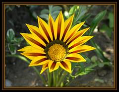 Flower Shoot 10