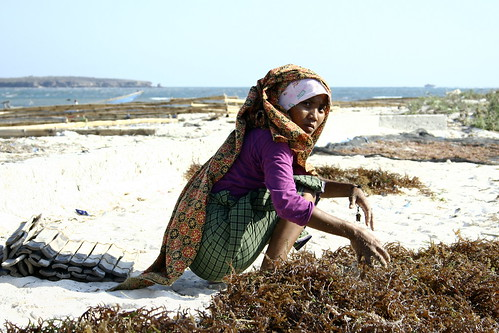 Serewe woman, drying seaweed