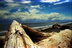 driftwood corpses (Parahanga) Tags: beach french push processed sooke