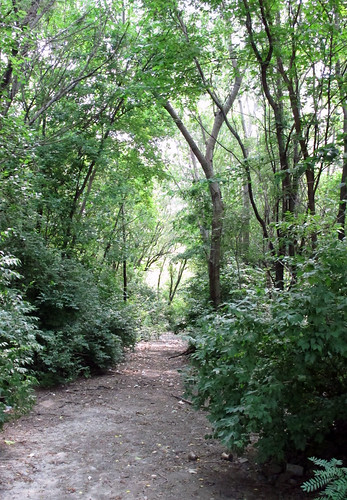 A forested road near Cass and 25th