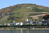 37-Vineyards on the Rhine River