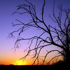 sun sliding westward (Scribbles With Cameras) Tags: sunset sky tree silhouette cloudless centralvictoria sailorsgully