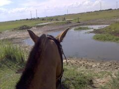 (alice pontes nunes) Tags: horse cavalo kryon crioulo vidagaucha