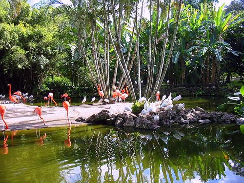 Flamingo Gardens 20090126
