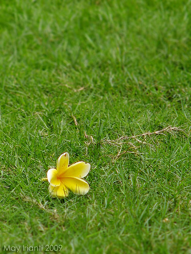 A Flower in The Grass