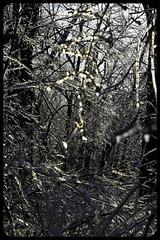 IceStorm09-34 (chuck.heeke) Tags: kentucky icestorm louisville january2009