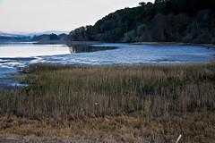 Tomales Bay 2 (Rhonda Dubin) Tags: california marincounty pointreyes tomalesbay
