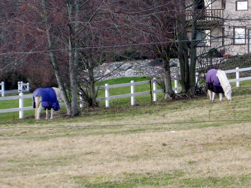 Pretty Purple Horsey Princes