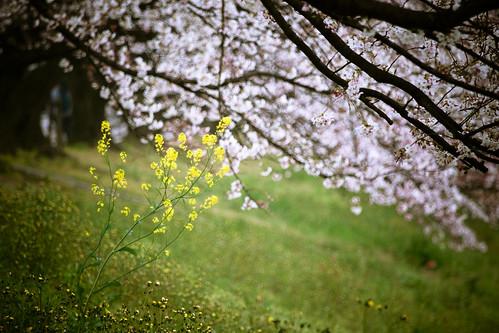 13458 : Sakura2009 #22