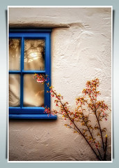 My Little Corner (Finntasia old) Tags: house building tree history home window wall cherry blossom curtain young photographers competition dorset bloom british bridport jotbe photographicexcellence c18th finntasia sensationalphoto nigelfinn