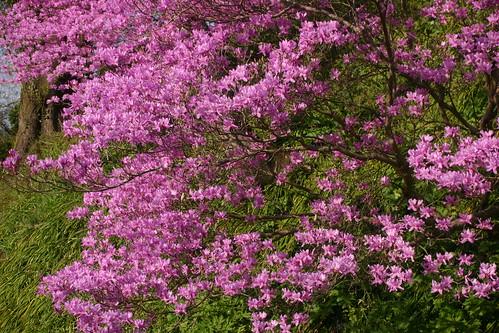 april09-flower