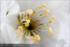 Flor-280309150326