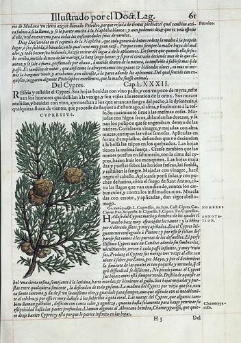 004- El cipres-Pedacio Dioscorides Anazarbeo 1555