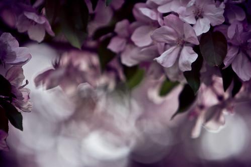floral bokeh(t)