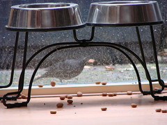 dog food feeders