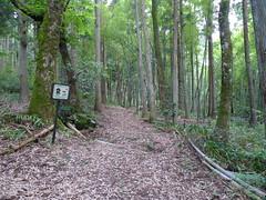 森林浴散歩コース