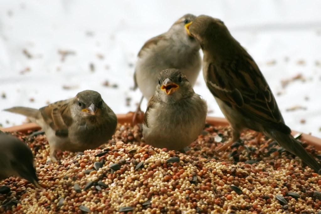 Baby Sparrows!