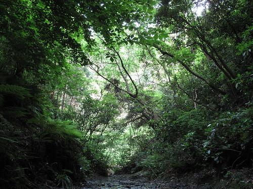 Futagoyama Forest Reverb 2