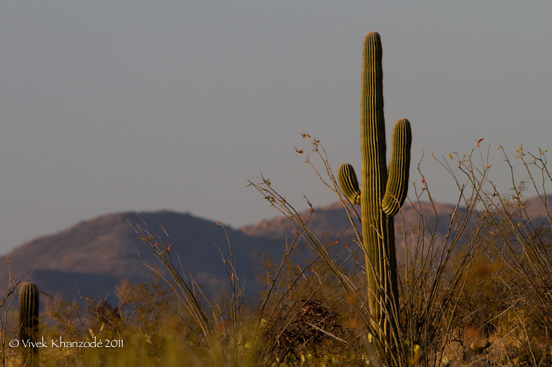 Desert Vista - Saguaro National Park East, Tucson, AZ