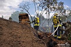Komposthaldenbrand Kostheim 28.05.11