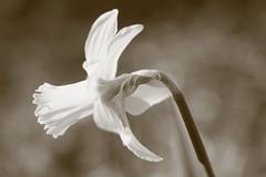 Parc Floral de Vincennes 08.03.2014 IMG_0503 (MUMU.09) Tags: france nature fleur 100400mm vincennes végétal parcfloraldevincennes canoneos7d mumu09
