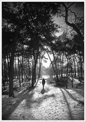 A walk in the Woods (digicla) Tags: wood trees winter shadow woman dog white black bomen walk bos schaduw zwart wit tegenlicht c750 raynox hatertsevennen dcr5000