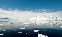 Antarctic Beauty