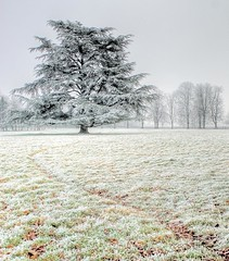 Frost (Erasmus T) Tags: winter england white cold field fog countryside frost westsussex january hdr hoar henfield photomatix 100109 landscapesofvillagesandfields paisajesdepueblosycampos