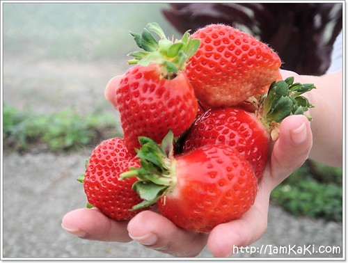 strawberry01