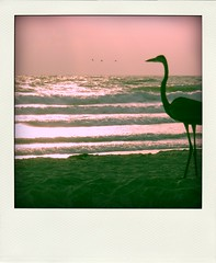 Heron on the beach (aprille s) Tags: pink sun bird beach heron water silhouette sand waves glare gulf florida sarasota lidobeach aprilles poladroid bepoladroid