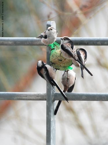 Bird's food