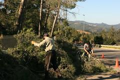 Ventada Sant Bartomeu Gener 09 141 (Ferrani_foto) Tags: de viento pins pinos sant rei llobregat molins desastre baix ventada bartomeu