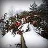 (Uncle Berty) Tags: uk england snow snowing berty brill bucks smalls hp18 robfurminger