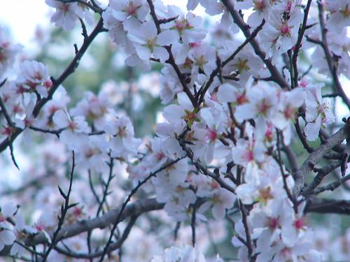 Blomsten på tæt hold... smuk ikke??