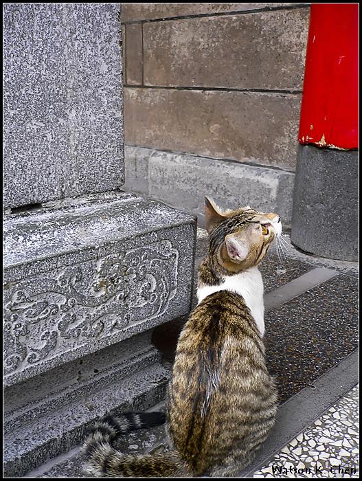 20090414-龍山寺貓貓-09.jpg