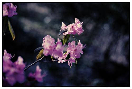 Gunnebo - blommor-16