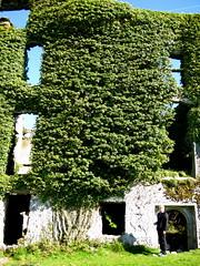 Menlo Castle (tempichanges) Tags: castle galway ruins menlo menlocastle