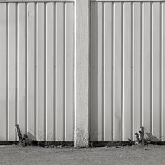 (Mann-ist-0) Tags: blackandwhite bw white wall square grey gray niksilverefexpro