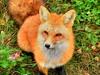 Mehrzeilige Lesezeichen Symbolleiste für Firefox