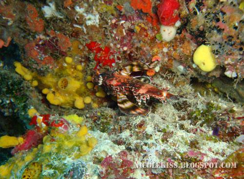camouflage fish