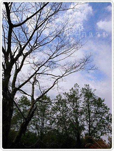 司馬庫斯巨木 (19)