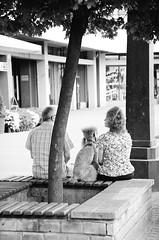 Hairstyle buddies (bartekodias) Tags: blackandwhite bw dog film analog blackwhite buddies kodak poland polska negative poodle kodakbw400cn hairstyle lodz resemblance łódź nikonn75 similarity 400cn n75 bw400cn f75 nikonf75 barbette autaut doghairstyle hairstylebuddies