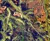 South American waterweed (Egeria densa) ELODEA ..... Original = (3193 x 2608) (turdusprosopis) Tags: aquaticplants invasiveplant invasiveplants hydrocharitaceae elodea egeriadensa floraargentina egeriadensaplanch invasiveaquaticplant florainvasora elodeadensa plantasargentinas plantasdeargentina plantasautóctonasargentinas plantasautóctonasdelaargentina floraautóctonaargentina floraautóctonadeargentina plantasnativasargentinas plantasnativasdeargentina plantasnativasdelaargentina floradelaargentina floradeargentina plantasautóctonasdeargentina floraautóctonadelaargentina floranativabrasileira floranativadobrasil floradobrasil argentineindigenousplants especiesinvasoras hydrocharitáceas hidrocharitáceas plantasinvasoras elodeas anacharisdensa philotriadensa hidrocaritáceas invasiveaquaticplants prohibitedplants pestaquaticplants plantasinvasorasdeespaña egerias hydrocaritáceas plantspest florainvasoradeespaña florainvasoraenespaña plantasinvasorasenespaña