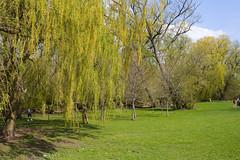 Unionville (kenyaya) Tags: park lake toronto ontario canada nature canon rebel xs markham unionville 1000d