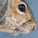Squirrel, Chesapeake Bay Field Trip