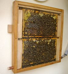 Observation Hive 3